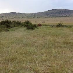 budget camping safaris Kenya, masai mara safari