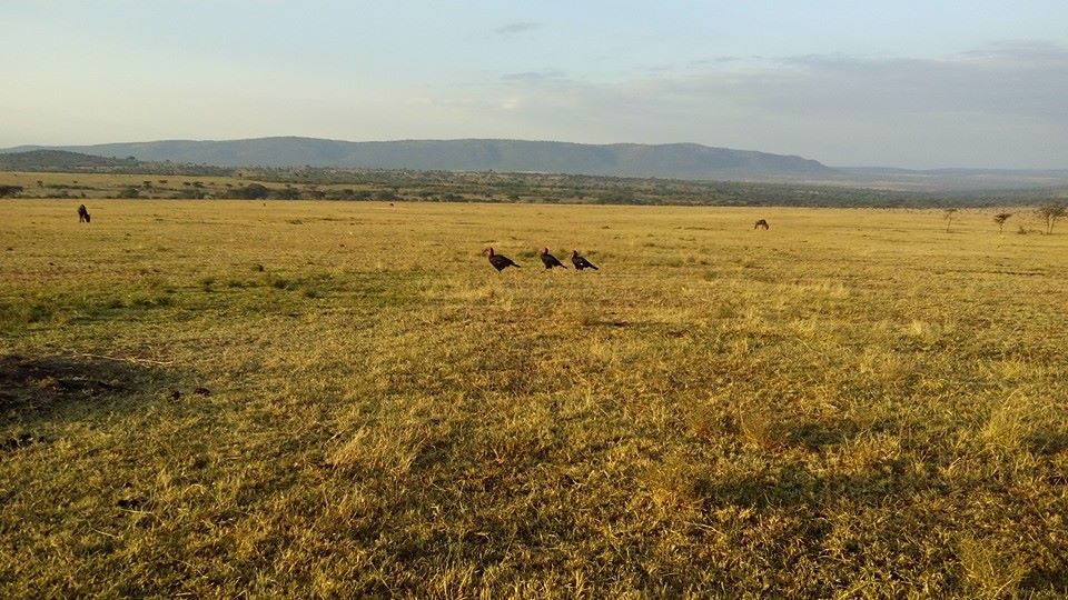 masai mara safari,weekend break,short break safaris,kenya wildlife safaris