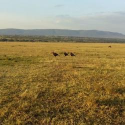 masai mara safari,weekend break,short break safaris,kenya wildlife safaris