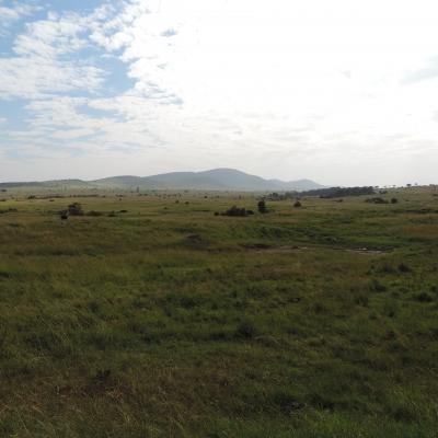Masai mara 2016 564
