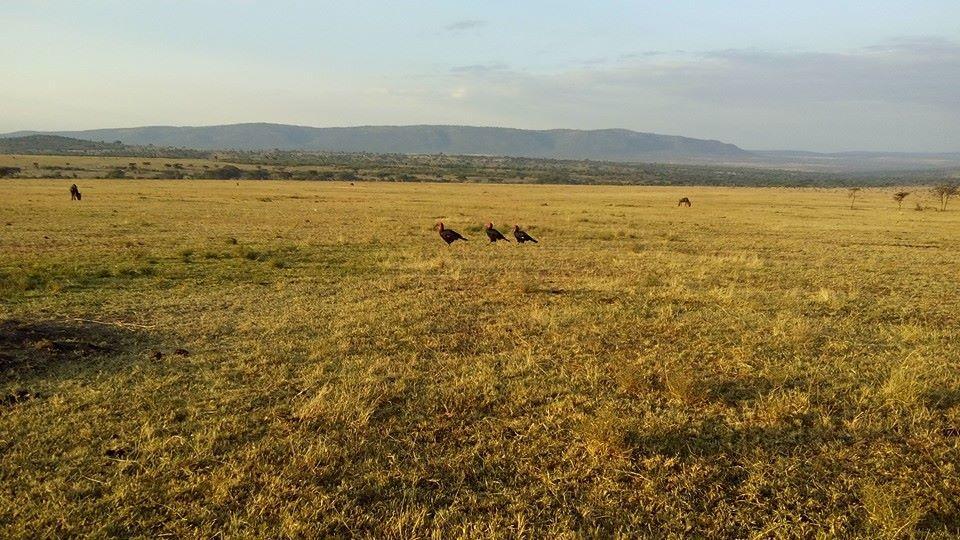 Masai Mara Budget Safaris- yha kenya travel
