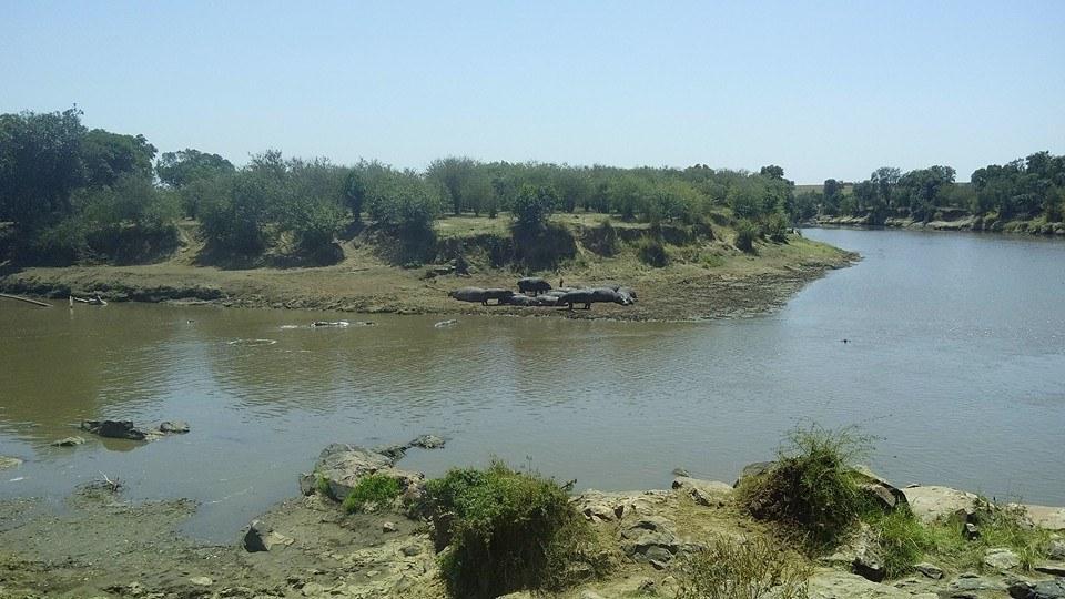 Masai Mara Budget Safaris- Mara River