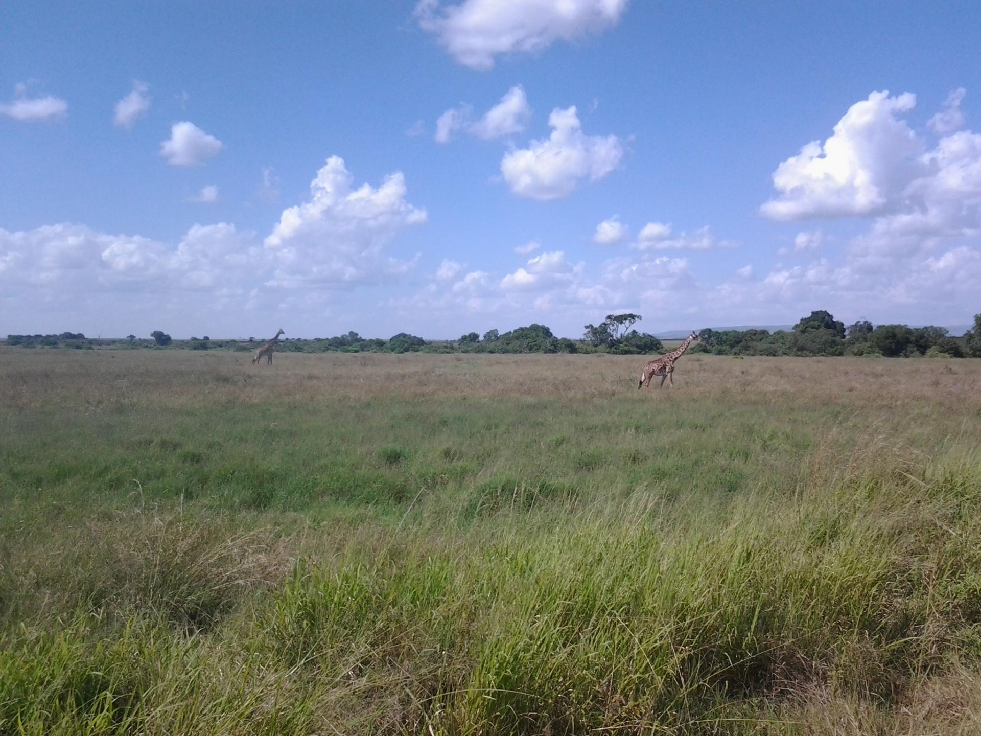 short safaris,Kenya safaris,Tanzania Safaris