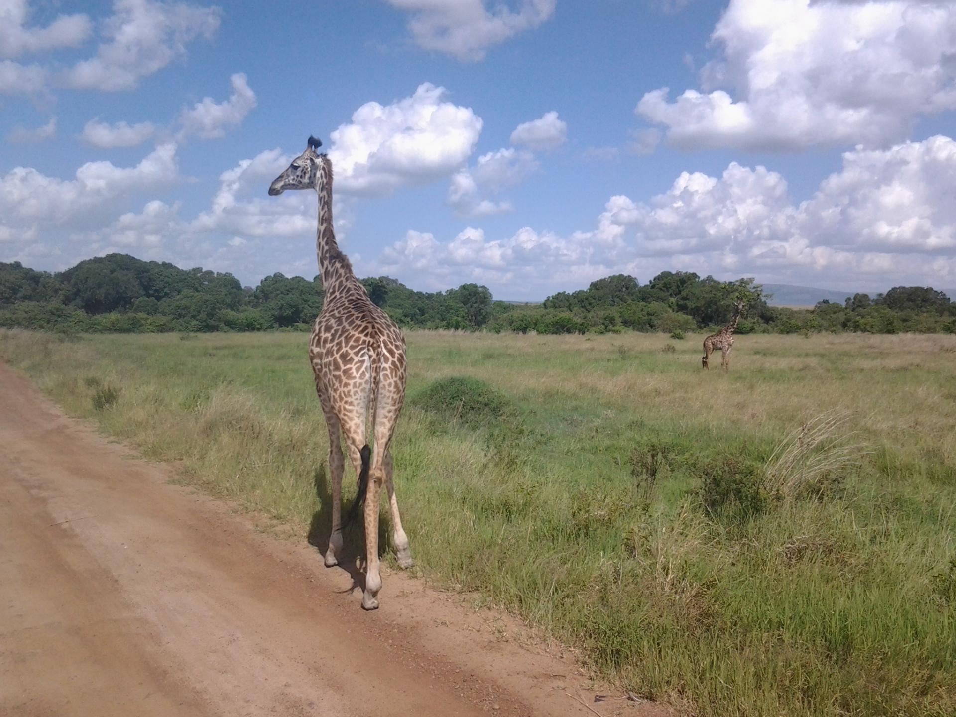 kenya budget safaris,tanzania budget safaris,camping safaris