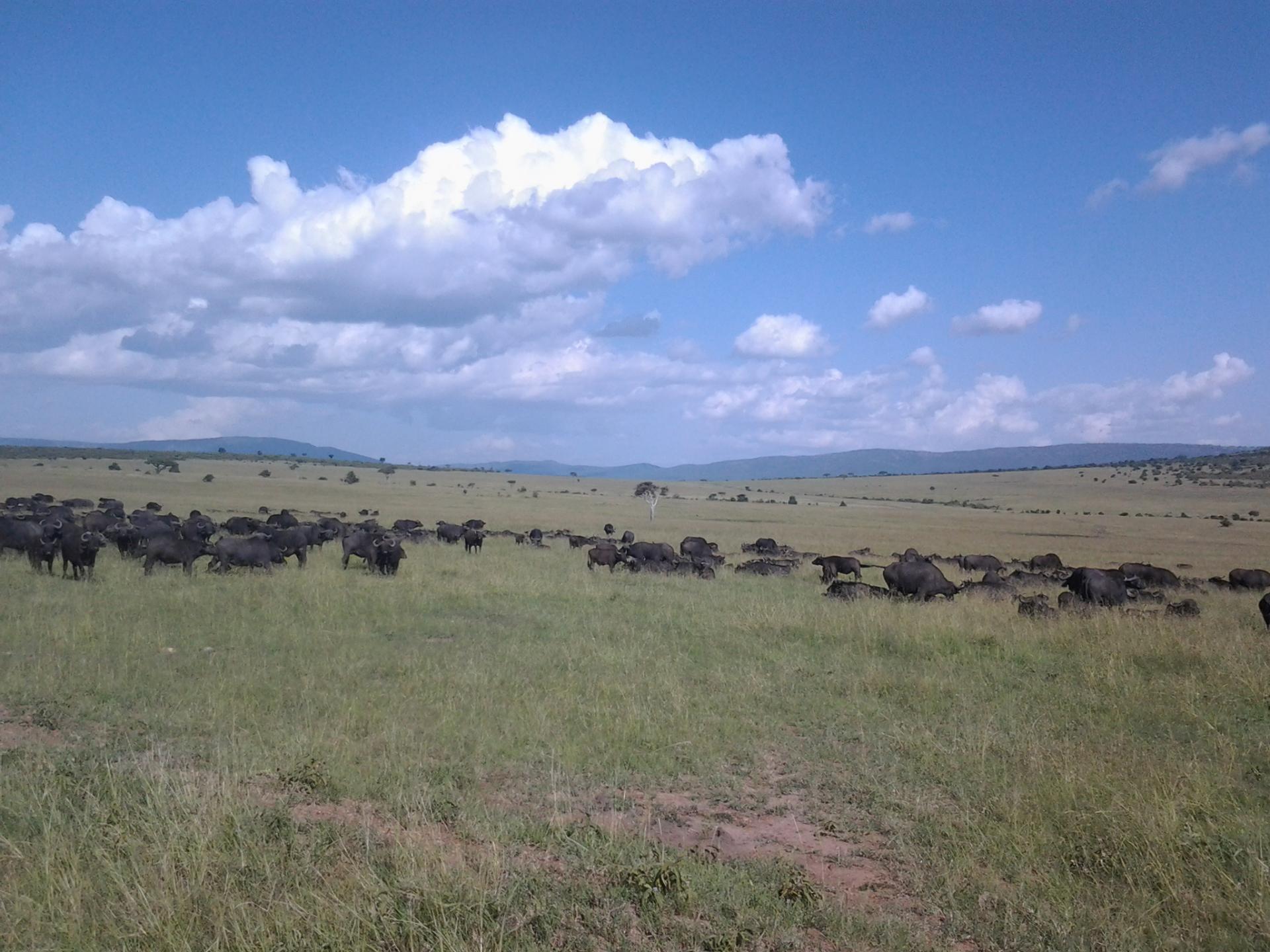 Kenya budget travel,masai mara,wildlife safari
