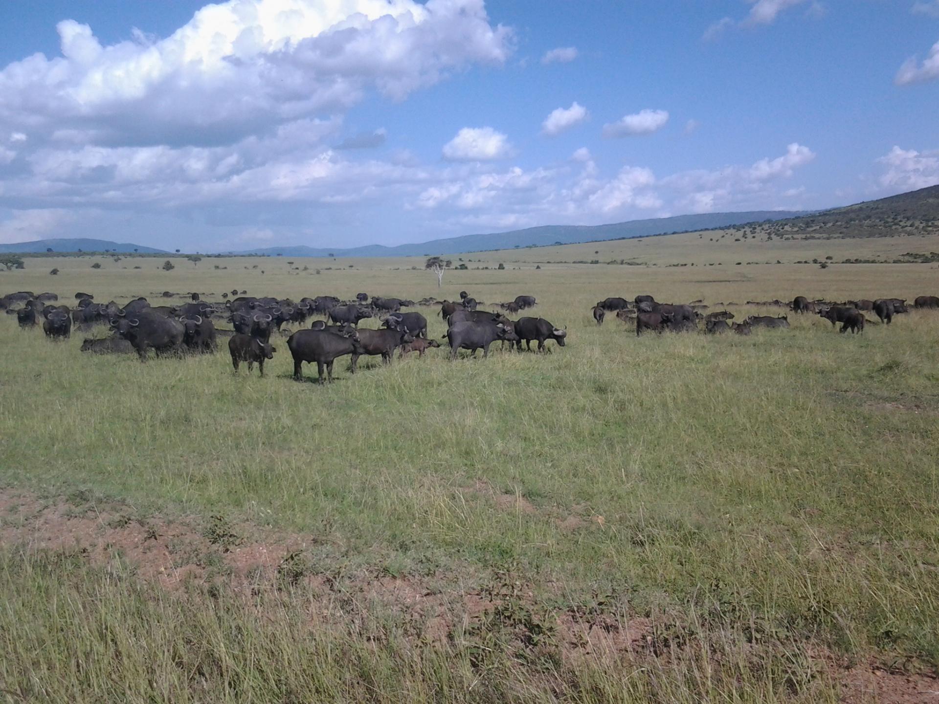 Wildlife Safari /Kenya Adventure Safaris/Holidays in Masai Mara