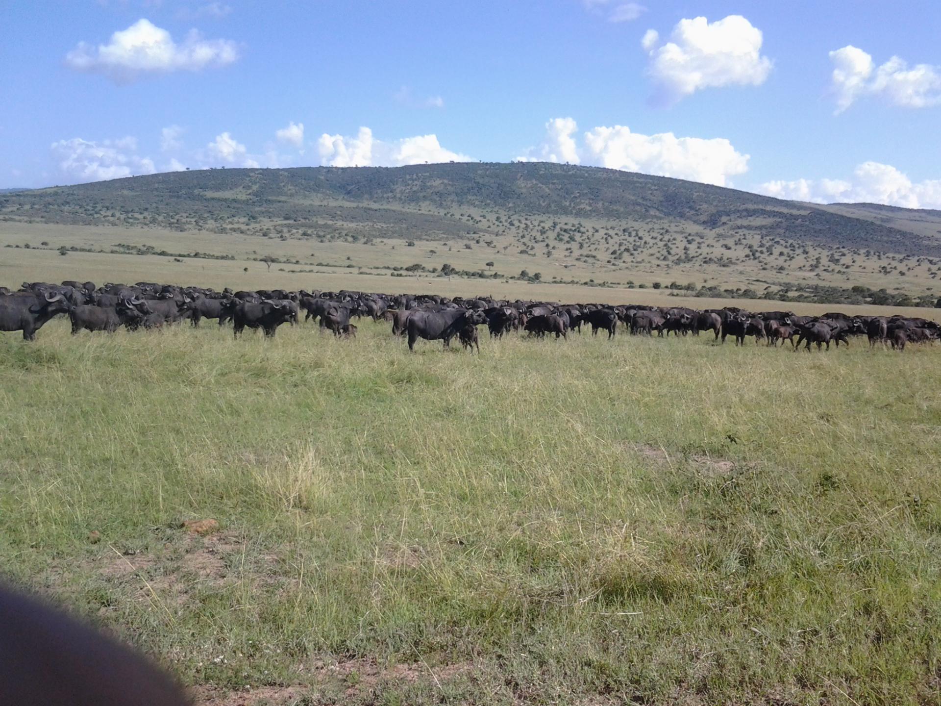 Masai Mara wildlife Safaris-Masai Mara Kenya
