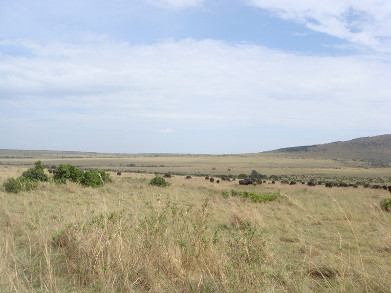 Masai Mara National Game Reserve