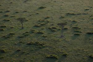 wildebeest migration, balloon safari, small group safaris, adventure budget camping safaris, Kenya,Kenya Adventure Safaris, Active Adventures, YHA Kenya Travel Tours And Safaris, Wildlife Safari,Kenya Budget Camping Safaris,Adventure Tours,Africa Safari,Book Tour Online.