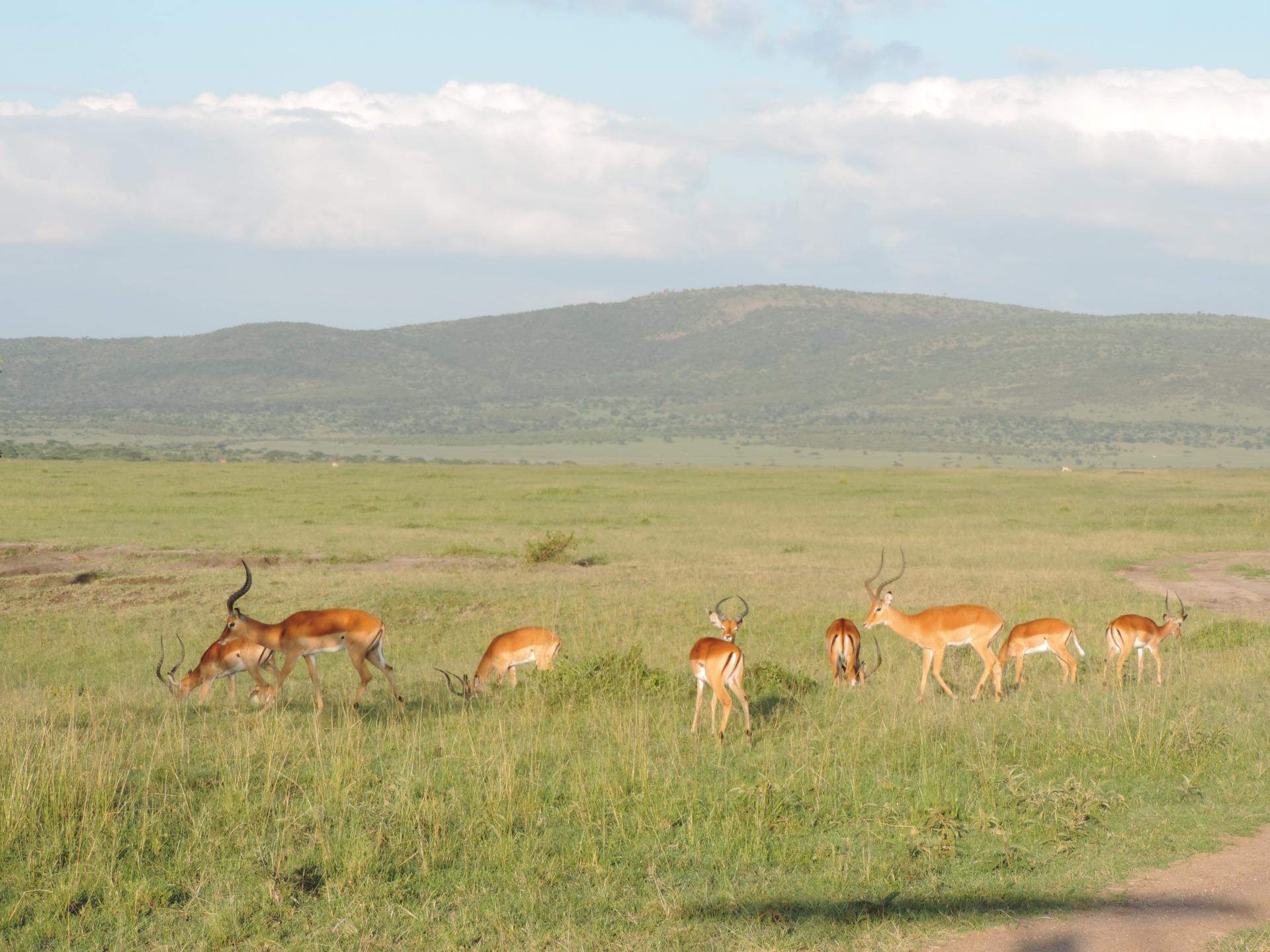 Masai Mara National Game Reserve