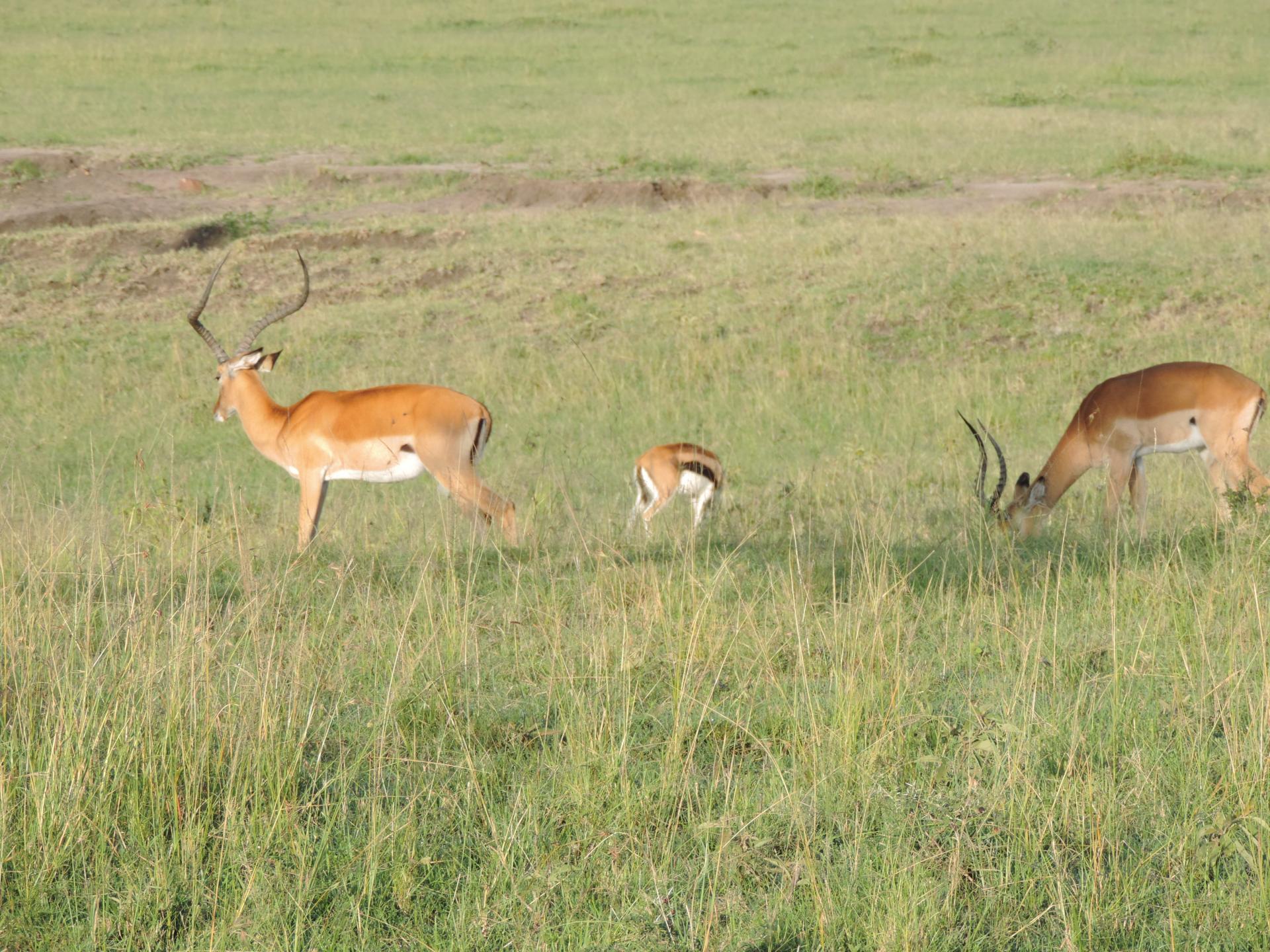 small group holidays,camping safaris,small group travel