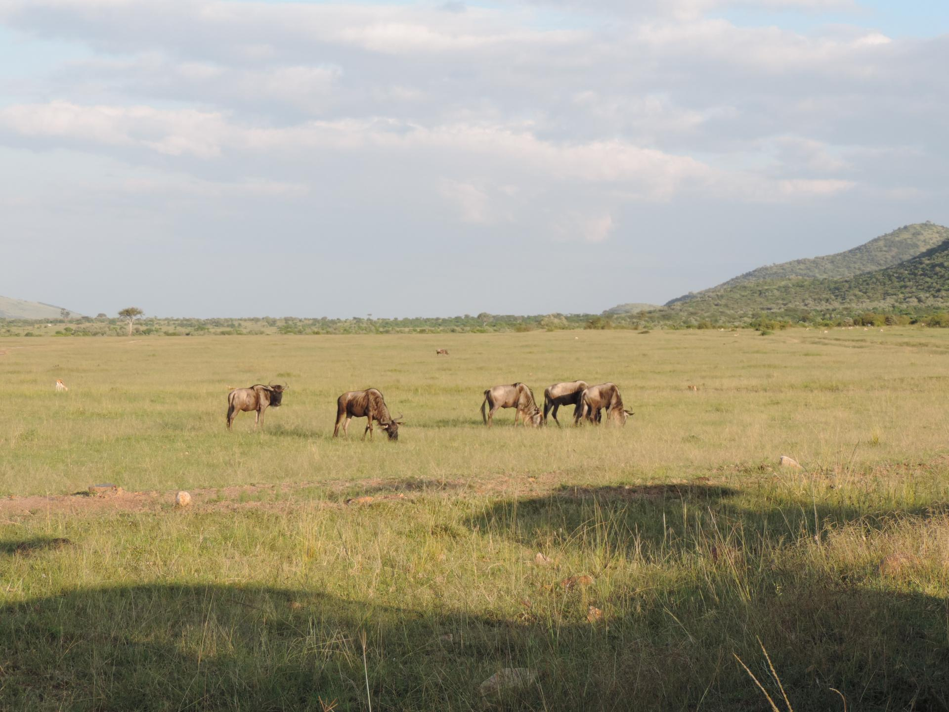 Kenya budget safari,group holidays,Kenya wildlife safaris