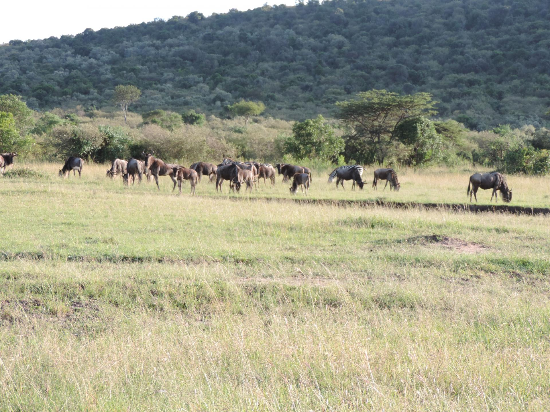 Kenya budget safari,group holidays,Kenya safaris