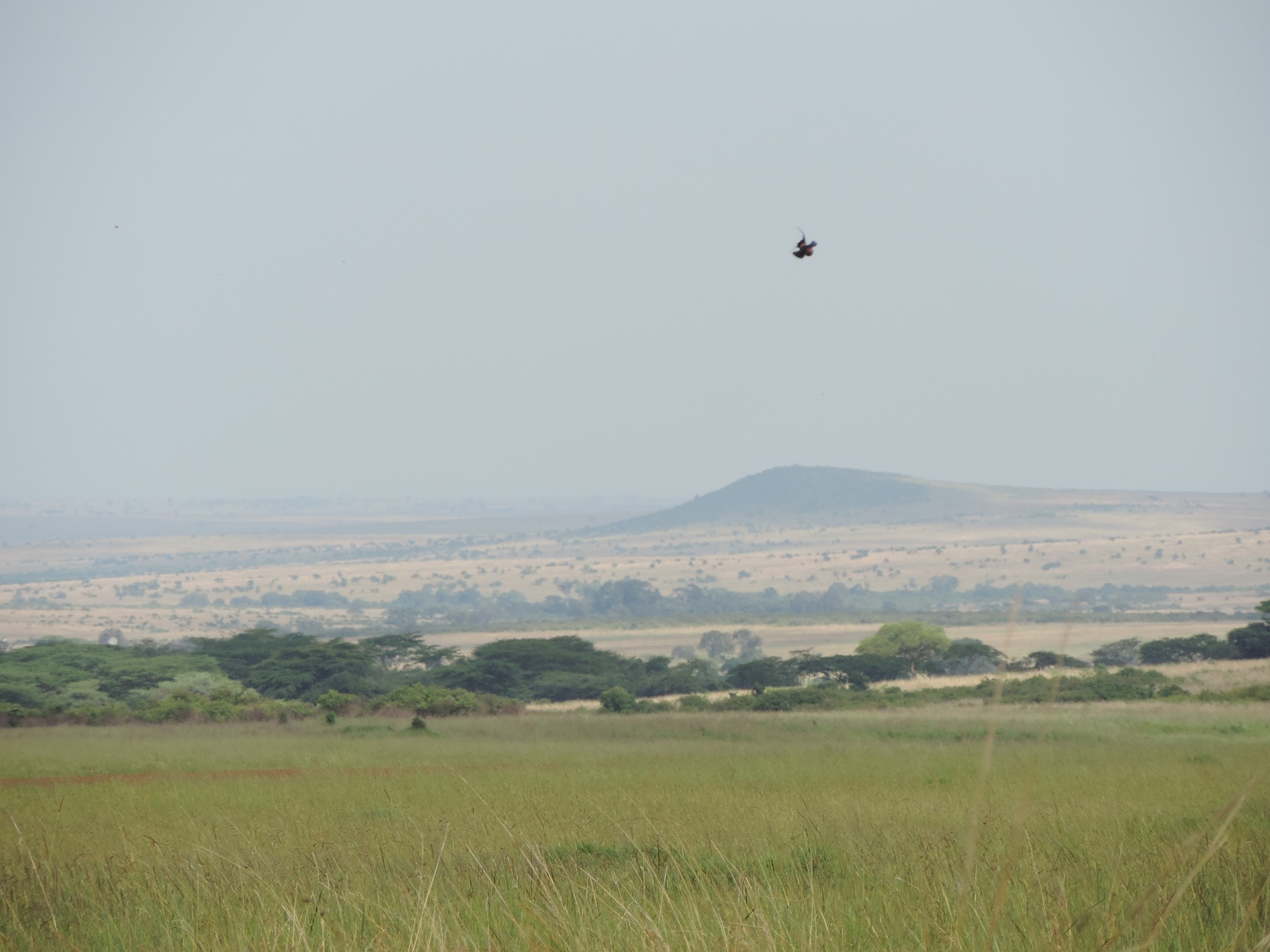 Kenya Tanzania Adventure Budget Camping Safari, YHA Kenya Travel