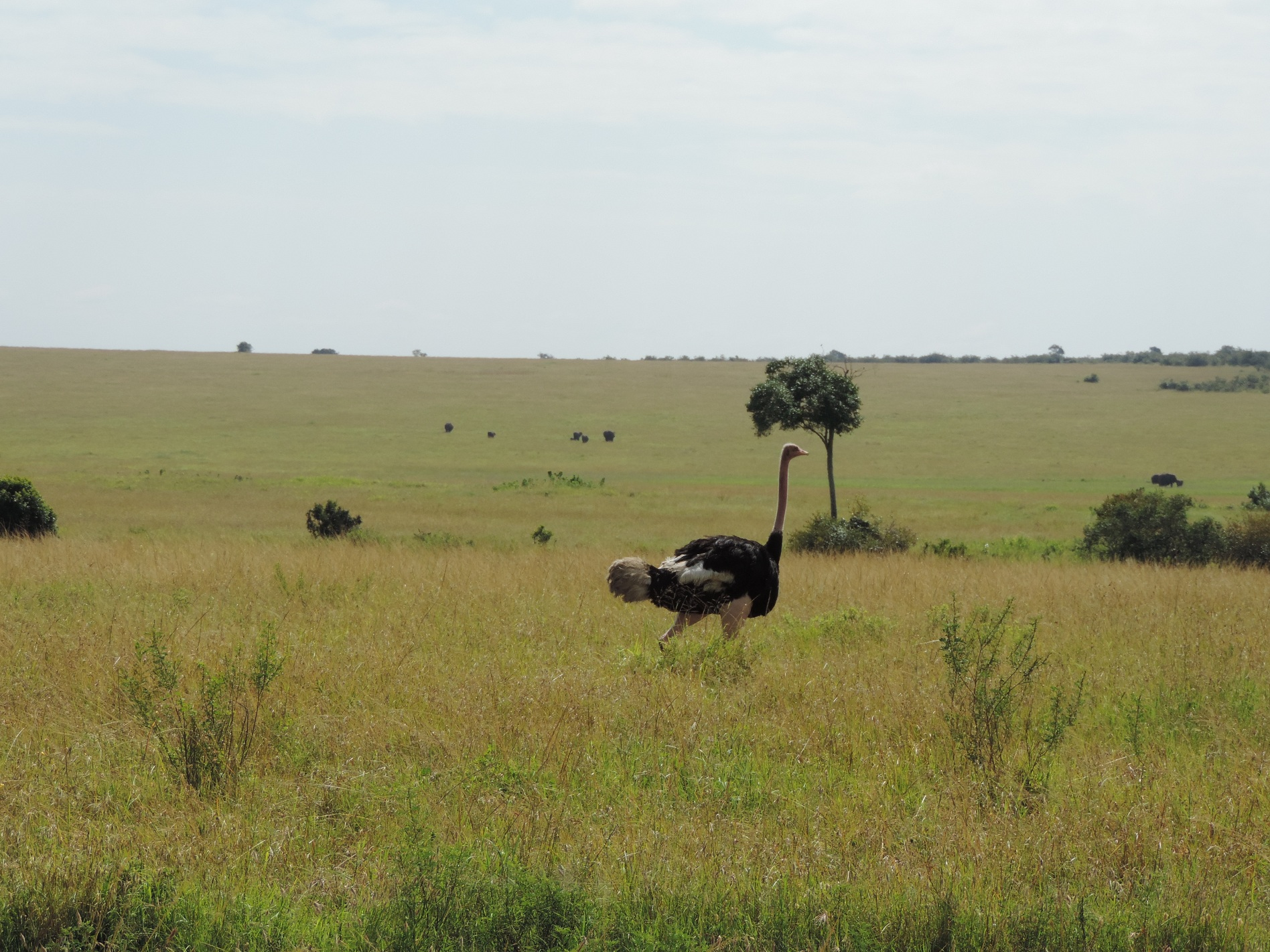 Ostrich-small group safaris,small group tours.budget camping safari