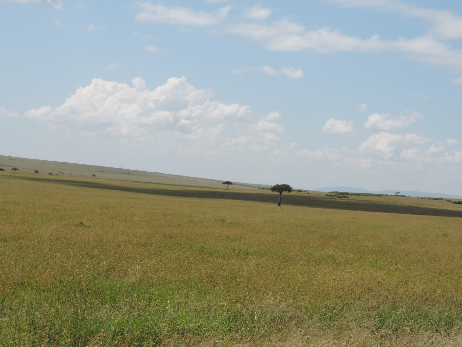 group holidays,Kenya safaris,masai mara, masai mara Kenya