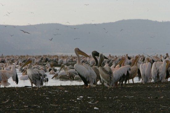Lake Nakuru National Park-YHA-Kenya Travel