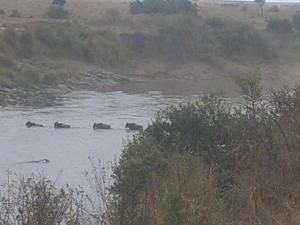 YHA Kenya Travel, Kenya Wildebeest Migration Safari in Masai Mara.