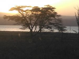 YHA Kenya Travel Adventure Safaris   Kenya Holiday Safaris and Tours   African Wildlife Safaris
