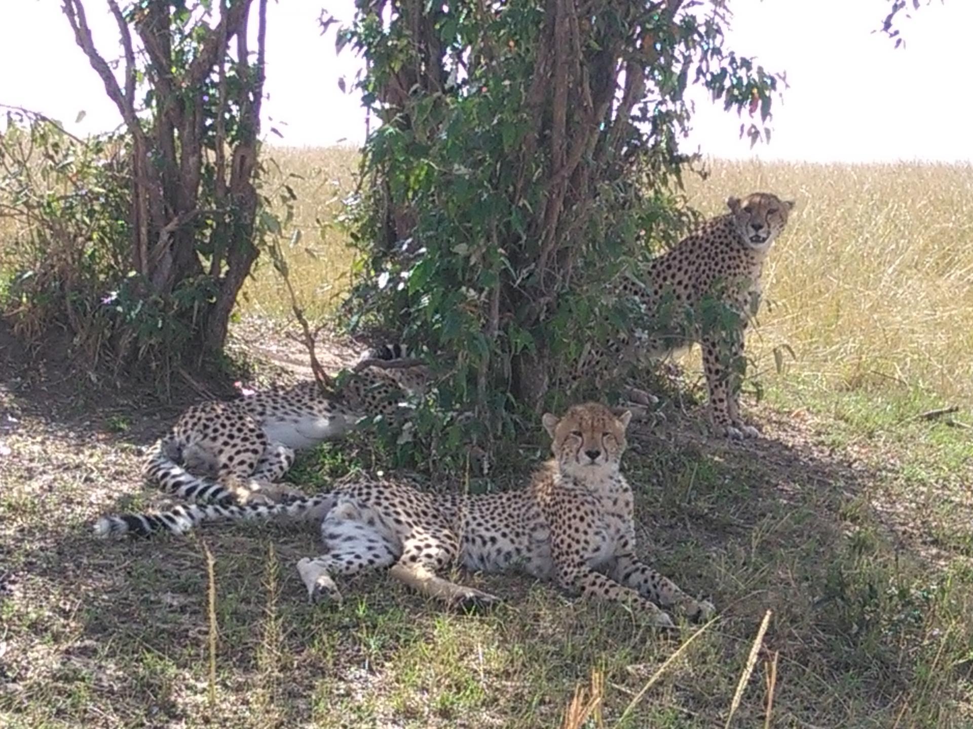 YHA Kenya Travel, Tours,Safaris, Kenya budget Camping Safari, Camping Active Adventures