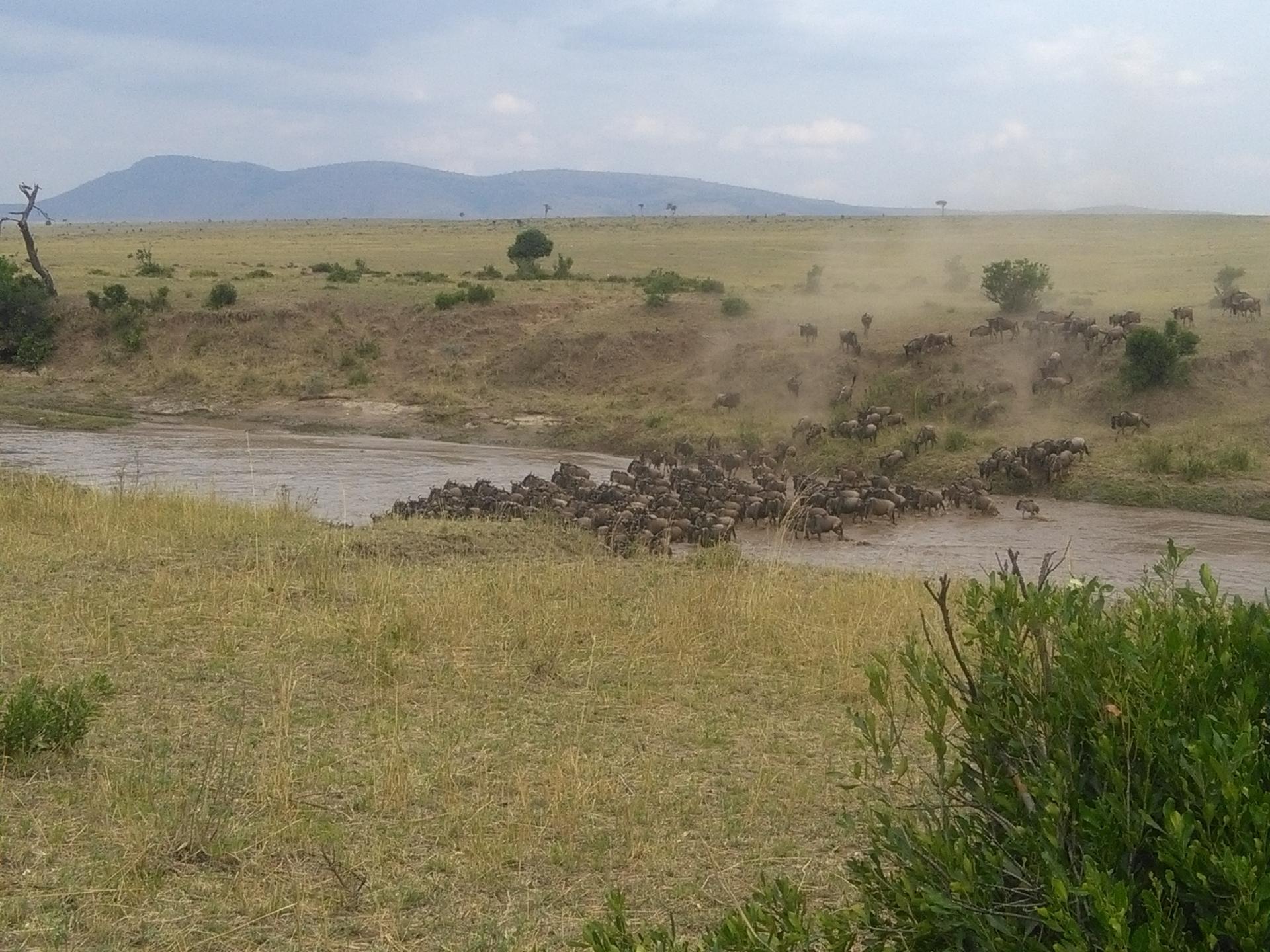 Kenya Adventure Safaris, Active Adventures, YHA Kenya Travel Tours And Safaris, Wildlife Safari
