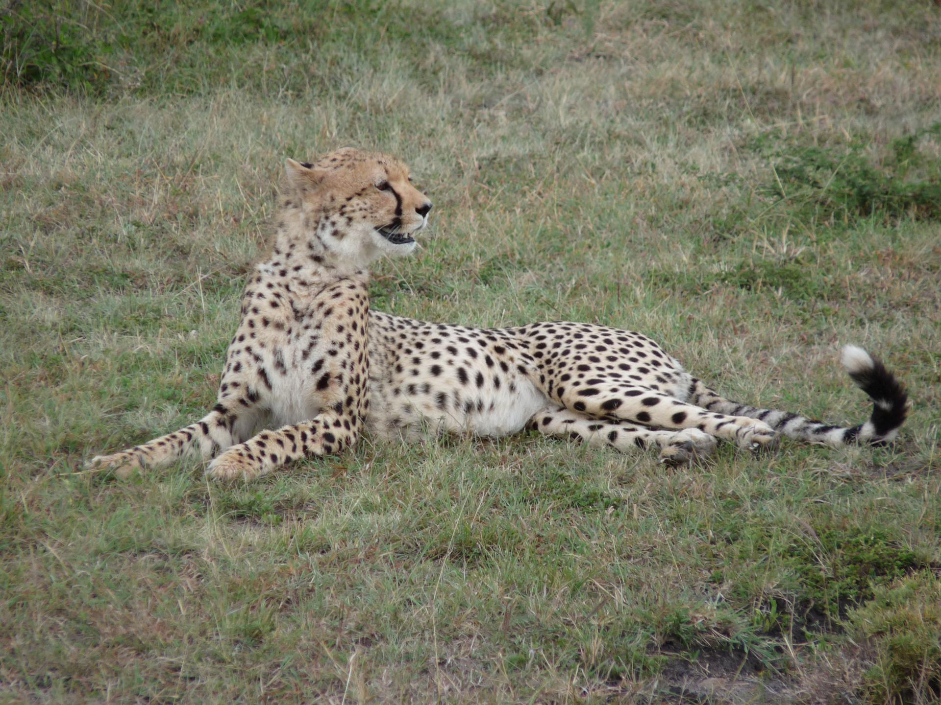 Wildlife Safari /Kenya Adventure Safaris/Holidays in Masai Mara
