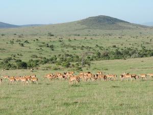 Kenya,Kenya Adventure Safaris, Active Adventures, YHA Kenya Travel Tours And Safaris, Wildlife Safari,Kenya Budget Camping Safaris,Adventure Tours,Africa Safari,Book Tour Online.