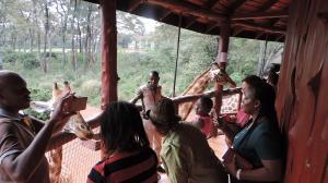 Browse exciting YHA Kenya Travel, Nairobi,Things to see and do in Nairobi, Guided Nairobi tours, Nairobi Sight Seeing tours, Giraffe Center,Day  Excursions., Kenya Camping Safaris, Kenya Short Safaris, Kenya Camping Adventure Budget Holiday Packages,Best Prices